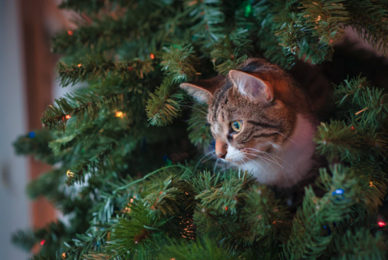 cat tree, cat, christmas tree, yescomusa, christmas tree recycling