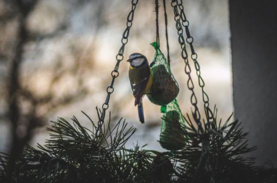 bird feeder, chirstmas tree, christmas tree recycle, yescomusa