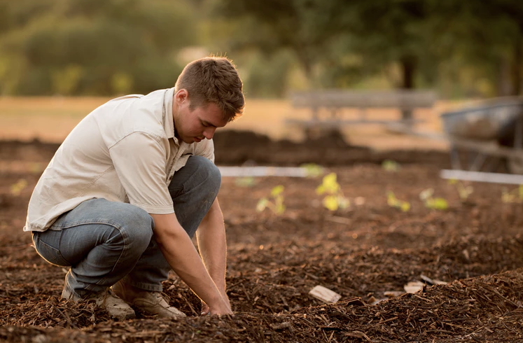 vegetable garden, yescomusa, pototao growing container