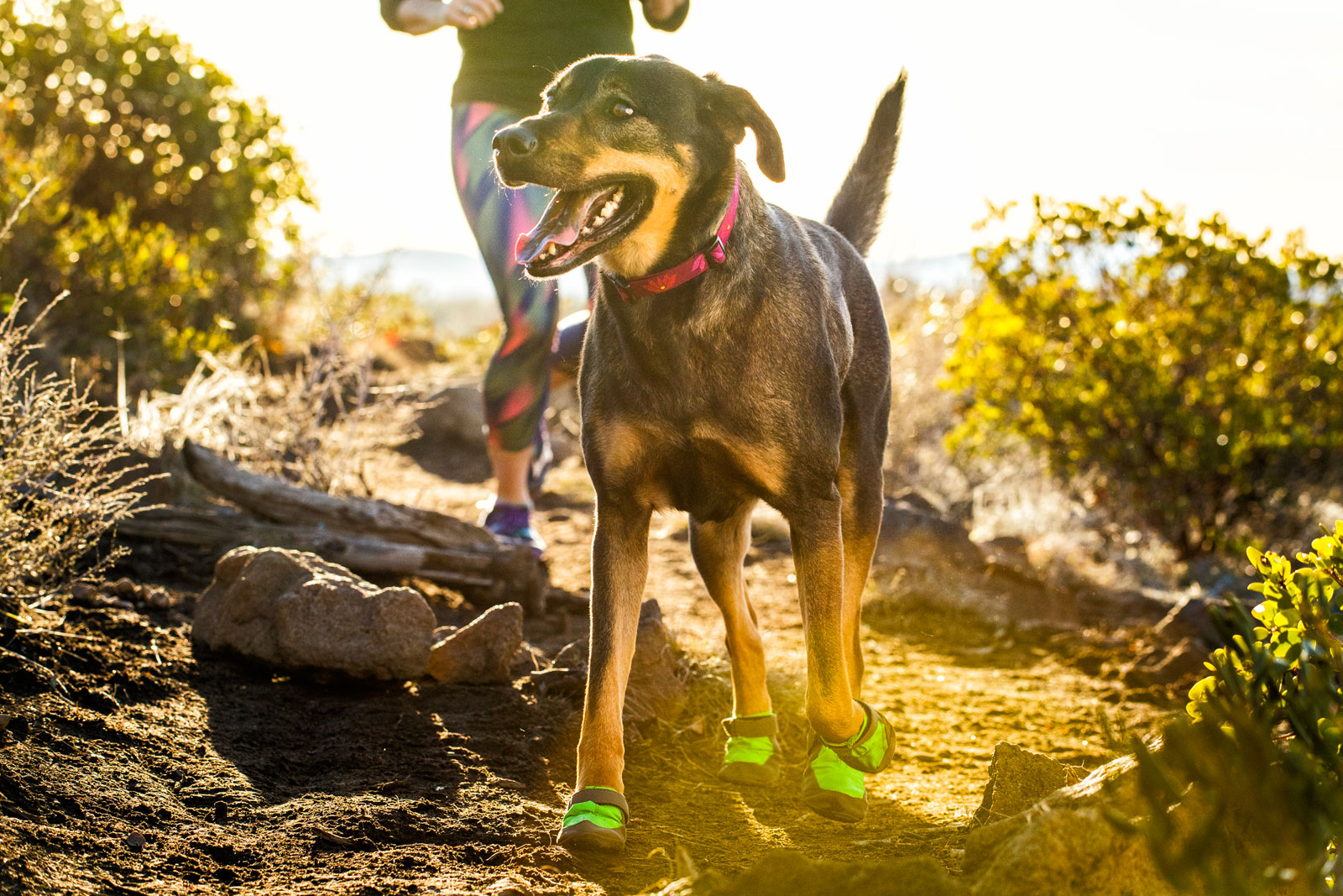 Ruffwear-Hoopie-Dog-Collar-II-All-Varieties thumbnail 12