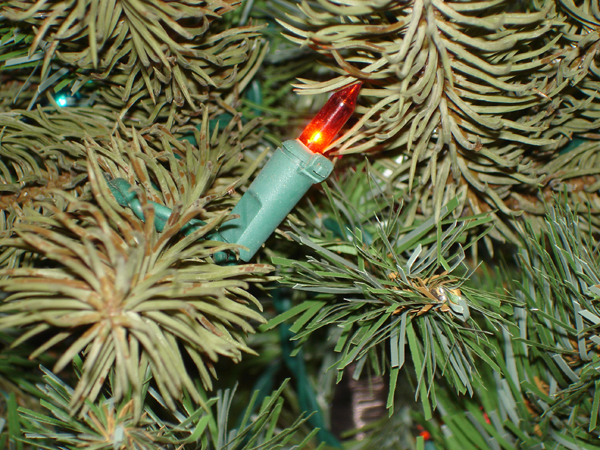 10' Downswept Douglas Fir Multi Pre Lit Christmas Tree