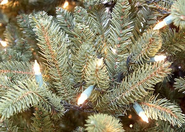 9' JUST CUT ASPEN FRASIER PRE-LIT CHRISTMAS TREE -CLEAR