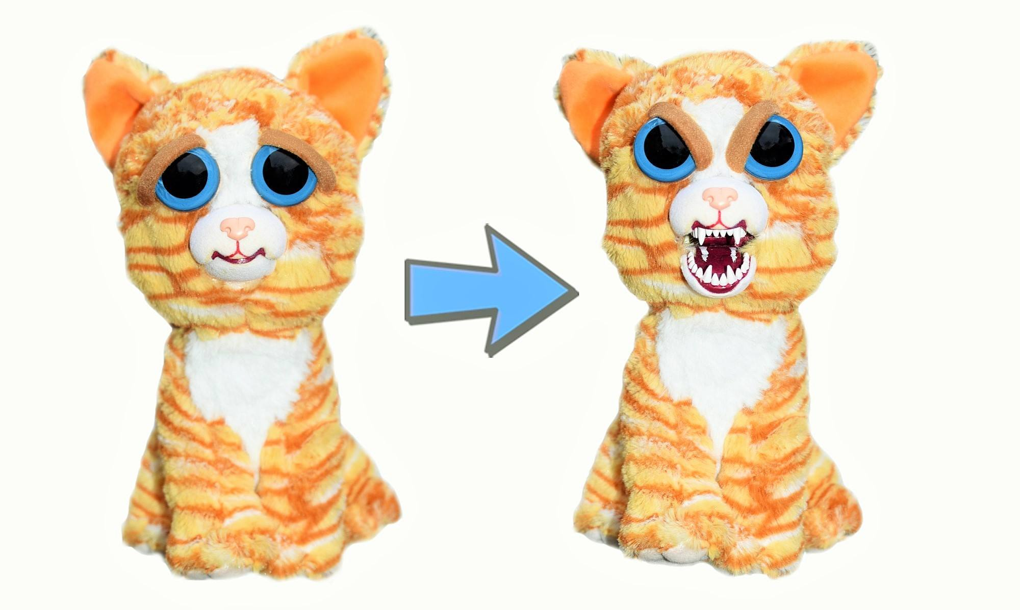 kitty cat for sale alberta