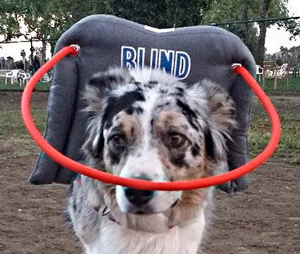 Muffin S Halo Guide For Blind Dogs Blind Dog Ebay