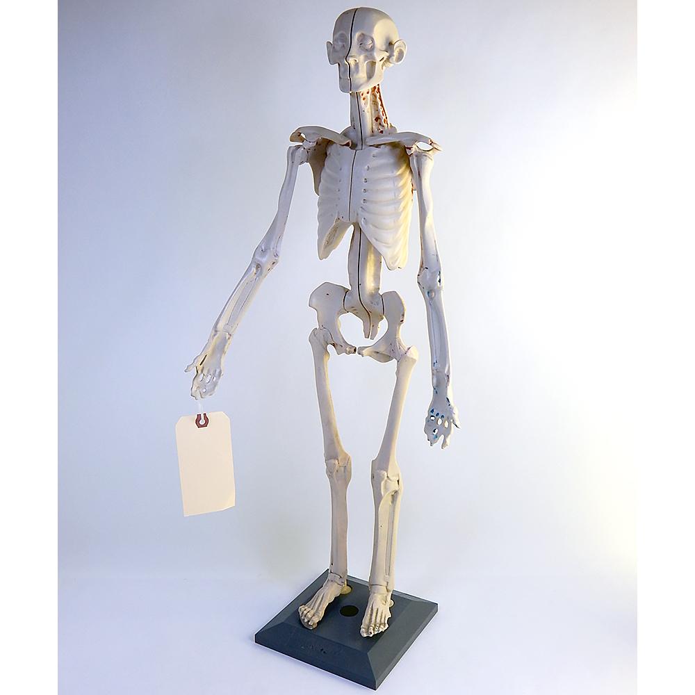 Zahourek System Anatomy In Clay Student Maniken Set With Conversion ...
